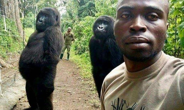 How I snapped Viral Gorilla Selfie: Virunga Ranger Elucidates
